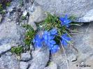 Intenzív kék